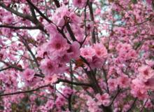 泰州佳兆业·壹号公馆举办首届植物摄影大赛  记录美好春光